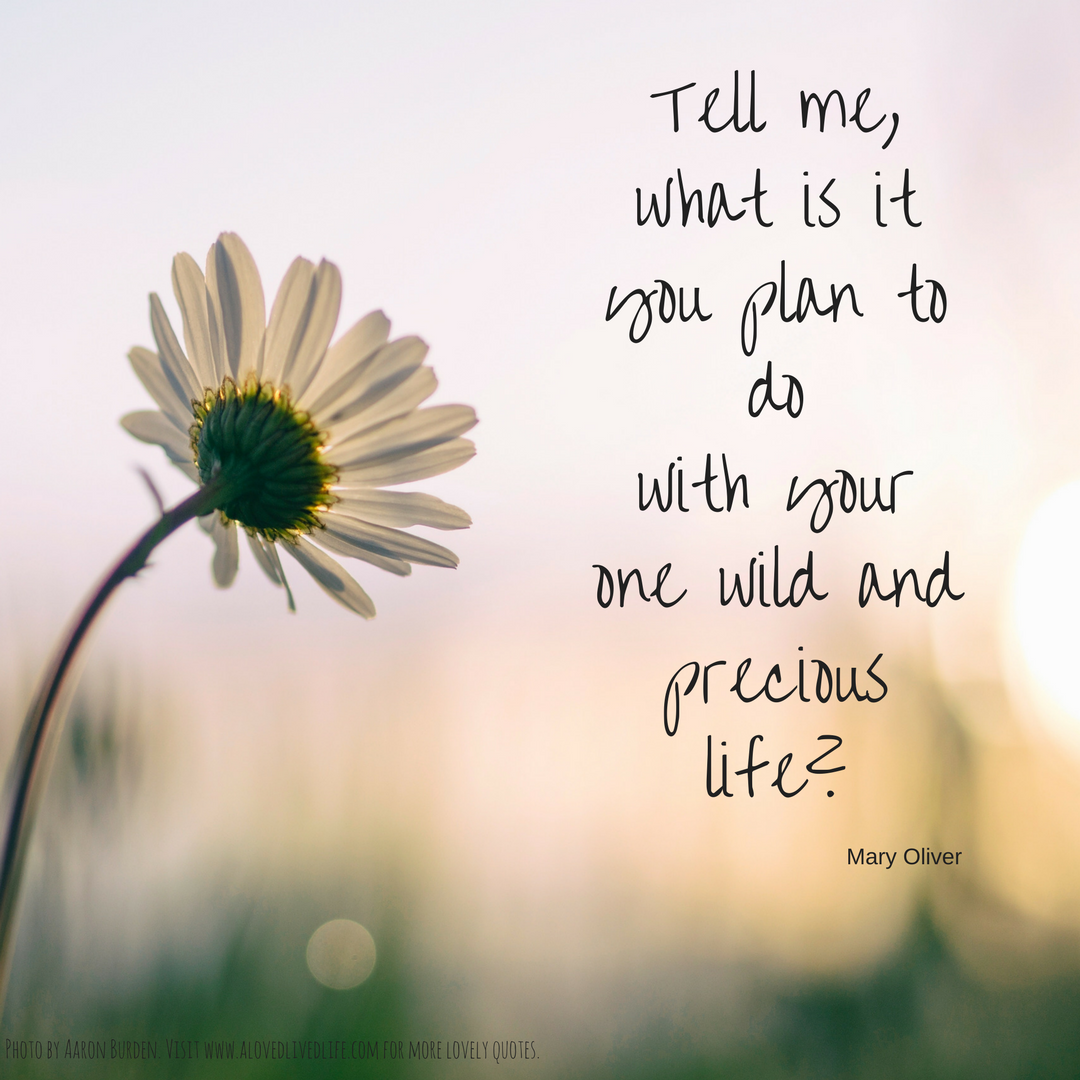 Life Is Precious Quotes Wild And Precious Life  A Loved Lived Life