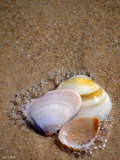 triple shells