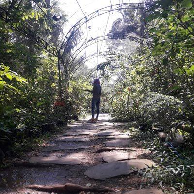 Taman Kupu Kupu Lampung