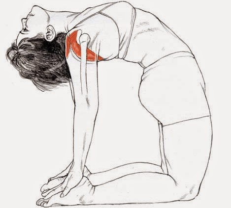 Ushtrasana for stronger breasts