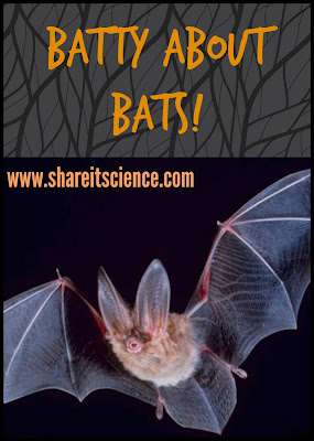 bats white-nose syndrome banana cure