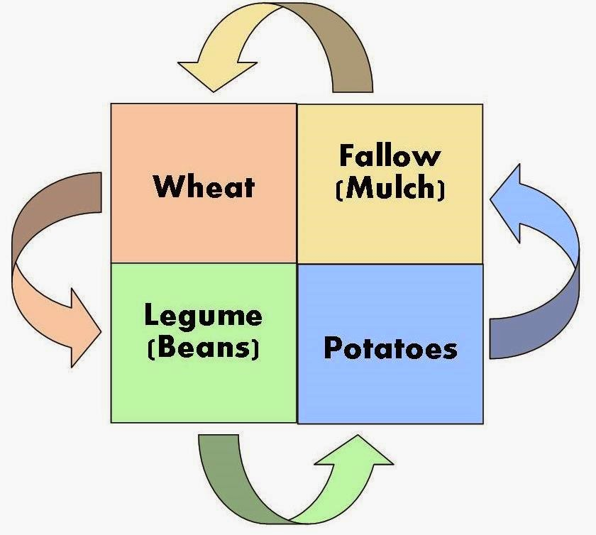 crop rotation and soil sustainability essay Wheat as the target crop in rotation tends to conventional agriculture systems on purchased inputs external to the firm presents possible challenges to the long-term sustainability of the system crop rotation systems are one agricultural sustainability, external inputs, soil quality.