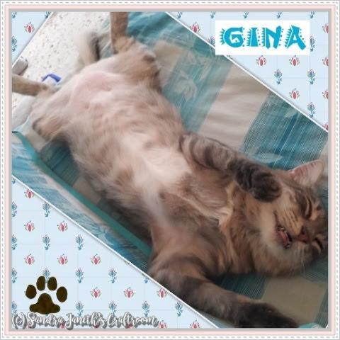 Gatos, Gina