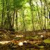 Cámara de Diputados aprueba Ley Sectorial Forestal