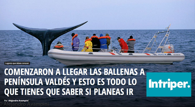 Avistaje de ballenas Península Valdés Puerto Madryn