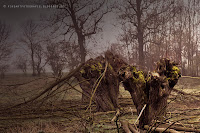 http://fineartfotografie.blogspot.de/2014/03/alte-weidenbaume-einem-nebligen.html