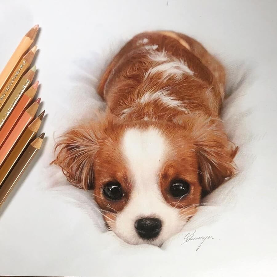 03-King-Spaniel-Puppy-Quanyu-www-designstack-co