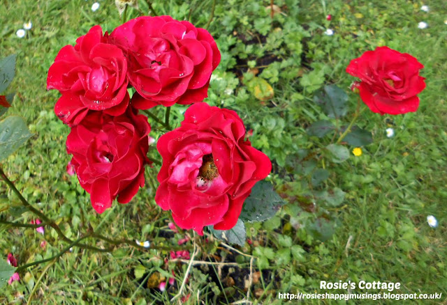 Saturday Smiles: Mum's beautiful roses.