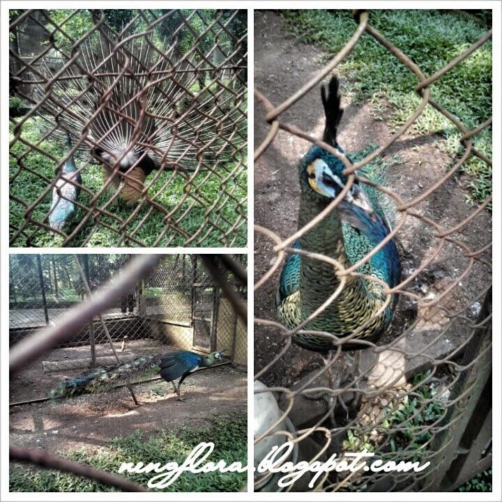 Lihat-lihat Hewan Di Kebun Binatang Bandung