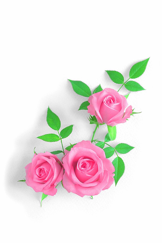 Картинки мистер, открытки розы спасибо написанное ручкой