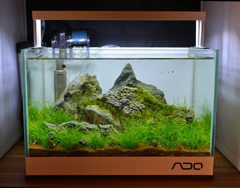 nano aquarium einrichtung 12 liter step by step little nature. Black Bedroom Furniture Sets. Home Design Ideas