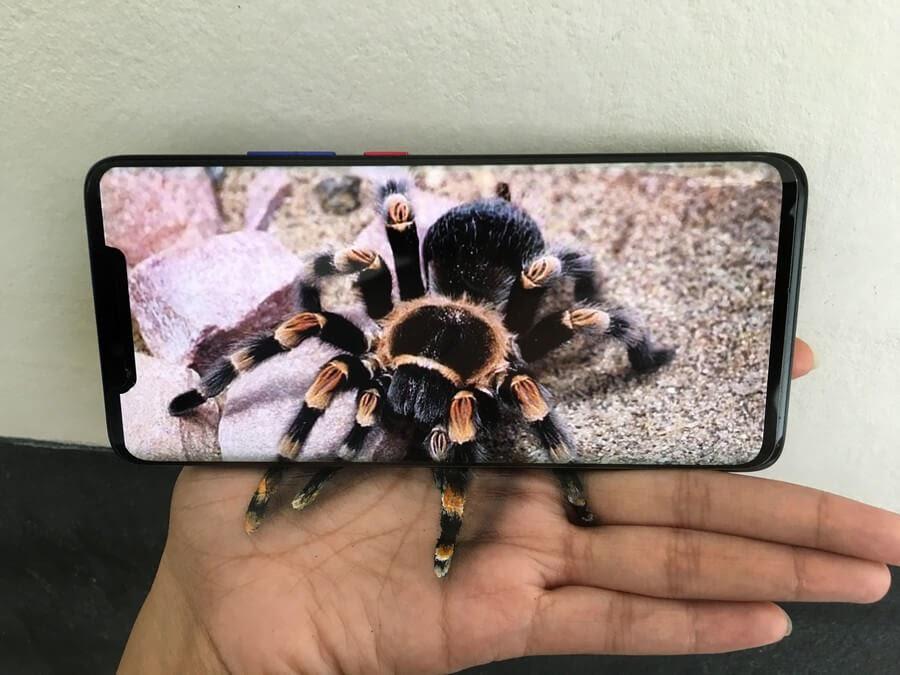 04-Tarantula-Spider-Iantha-Naicker-3D-Art-www-designstack-co