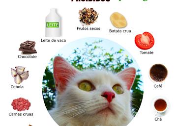 14 alimentos proibidos para gatos