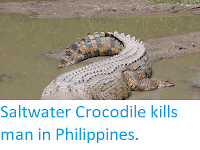 https://sciencythoughts.blogspot.com/2018/02/saltwater-crocodile-kills-man-in.html