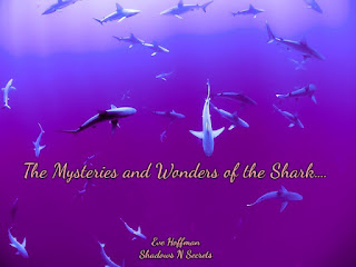 The Mysteries and Wonders of the Shark....The Mysteries and Wonders of the Shark.... Life is amazing when we step back and enjoy...