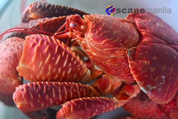 Batanes Food | Coconut Crab and Flying Fish | Escape Manila