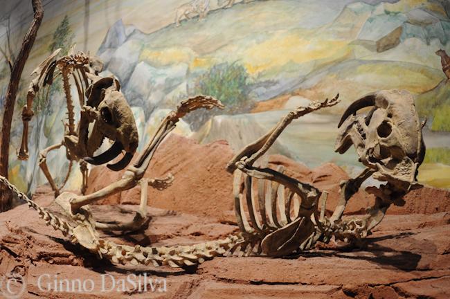 Era Mesozoica en el Museo Paleontológico Egido Feruglio en Trelew