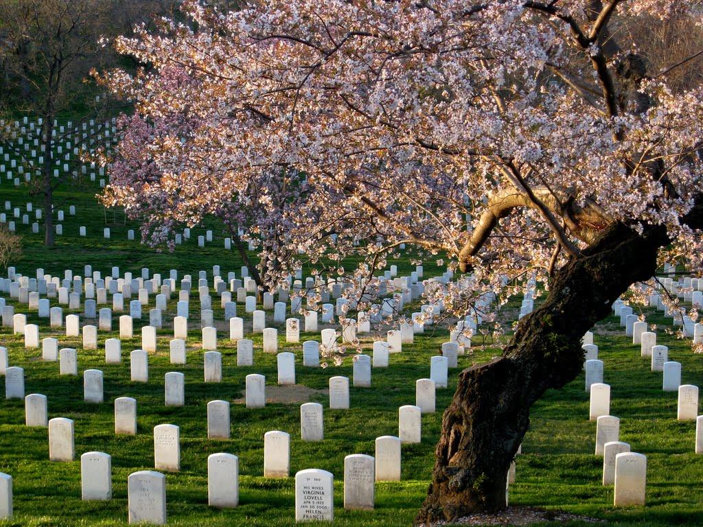Car Service For Arlington National Cemetery
