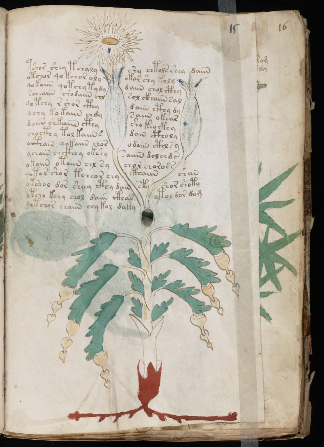 manuscrito029