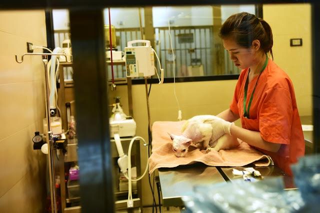 Hầu hết những con chó, mèo được đưa về trung tâm cứu hộ Soi Dog ở Phuket (Thái Lan) đều được theo dõi tại bệnh viện trước khi chuyển về chuồng nuôi nhốt. Thời gian điều trị tối thiểu cho mỗi con từ khi nhập viện đến khi khỏe mạnh bình thường mất ít nhất một tuần.