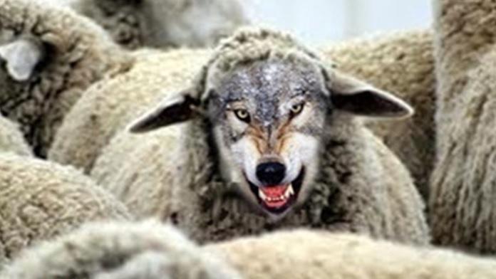 Il lupo travestito da agnello (Esopo)
