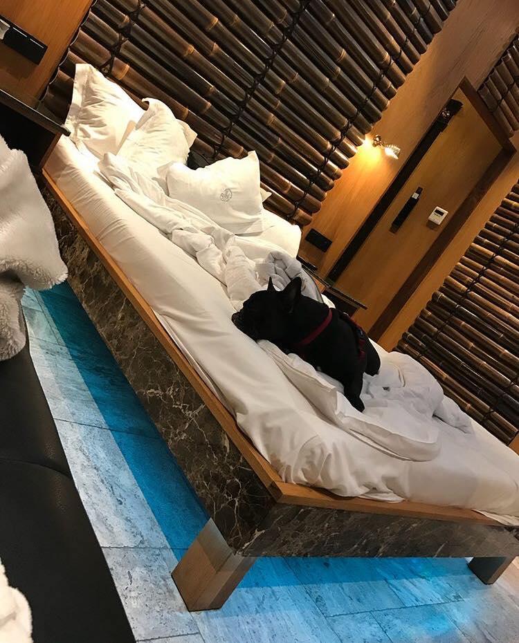 hotel dog friendly, hotel dla psów sopot, hotel nad morzem pies