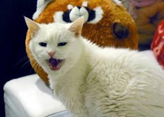 Kediler Mart ayında neden miyavlar?