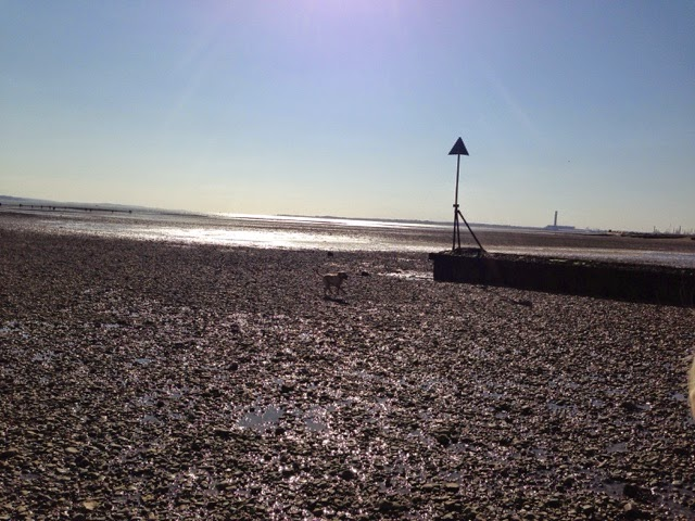 Tin Box Dog running on the beach