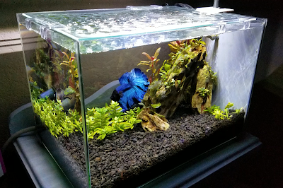 5-gallon planted betta tank