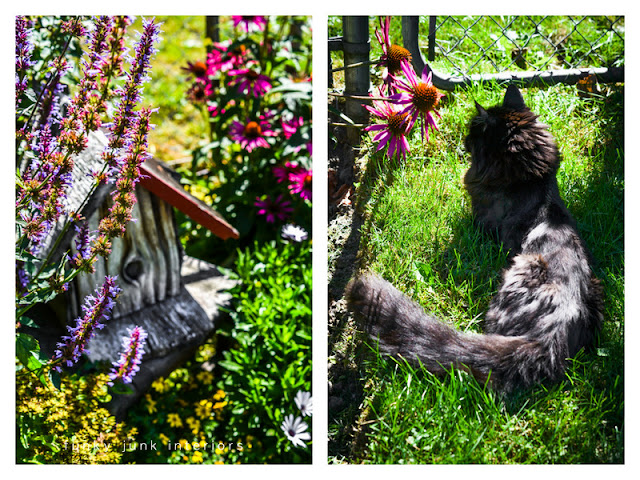 birdhouse and cat by flowers in backyard