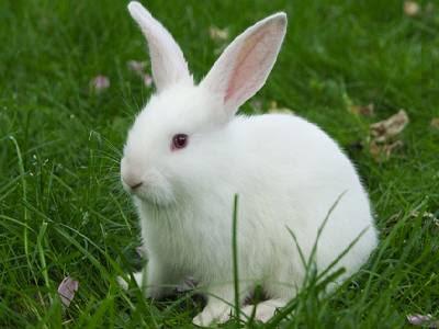 Pet Animals Name Rabbit
