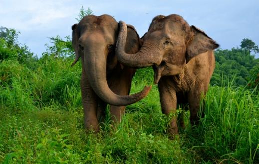 Gajah Menjadi Salah Satu Hewan yang Pandai Berrhitung