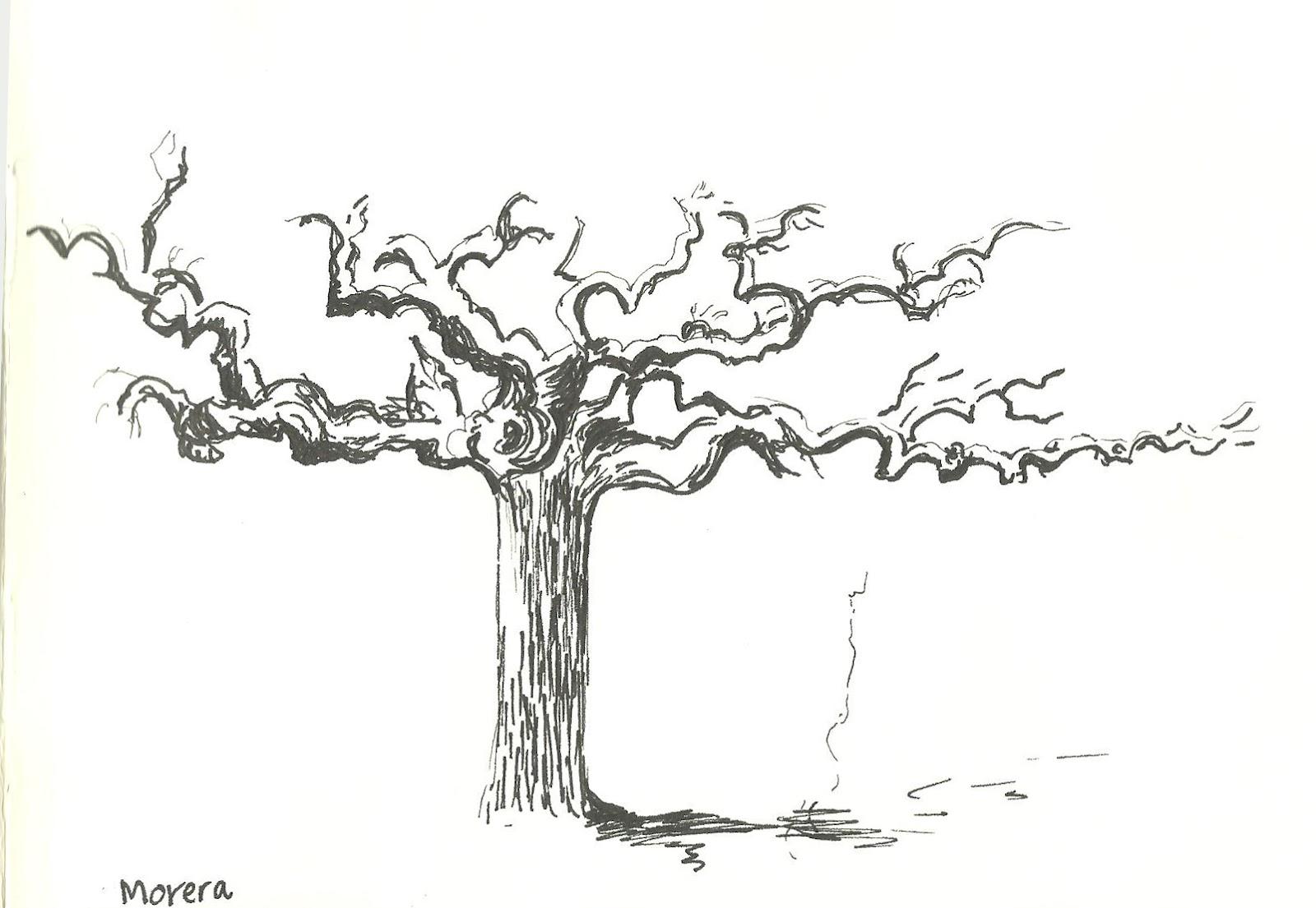 De Vuelta Con El Cuaderno: Árboles En El Parque