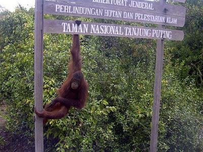http://www.wisatakalimantan.com/2016/07/taman-nasional-tanjung-puting-yang-sudah-mendunia.html