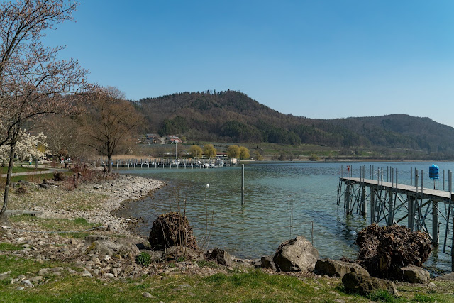 Wandern Konstanz Bodensee SeeGang Etappe 3 - Riedwiesen und Steiluferlandschaften am Überlinger See: Von Bodman durchs Aachried nach Ludwigshafen und auf dem Blütenweg nach Sipplingen 10