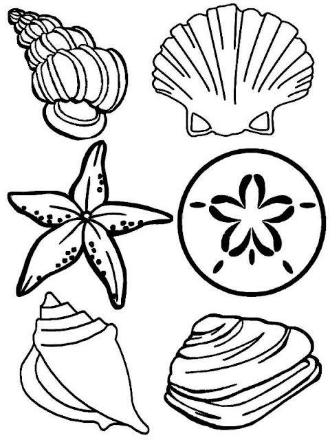 conchas para colorear