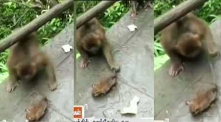 Viral video showing Monkeys playing with Mouse released