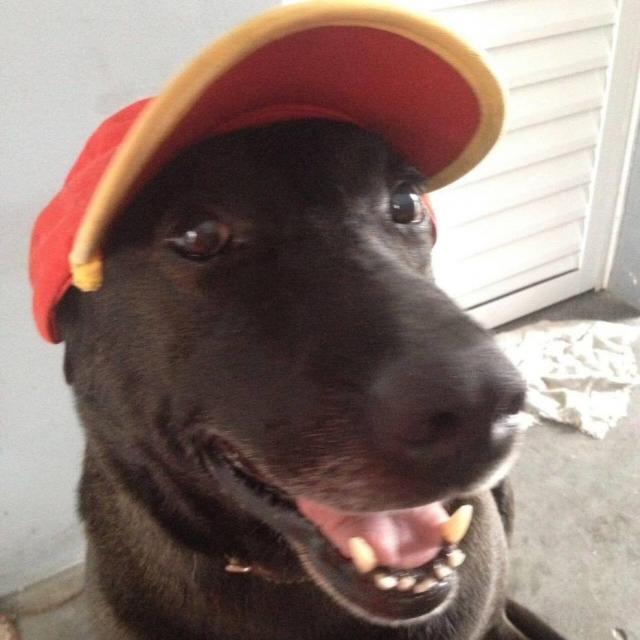 Cão é adotado e vira 'funcionário exemplar' de posto de gasolina em Mogi