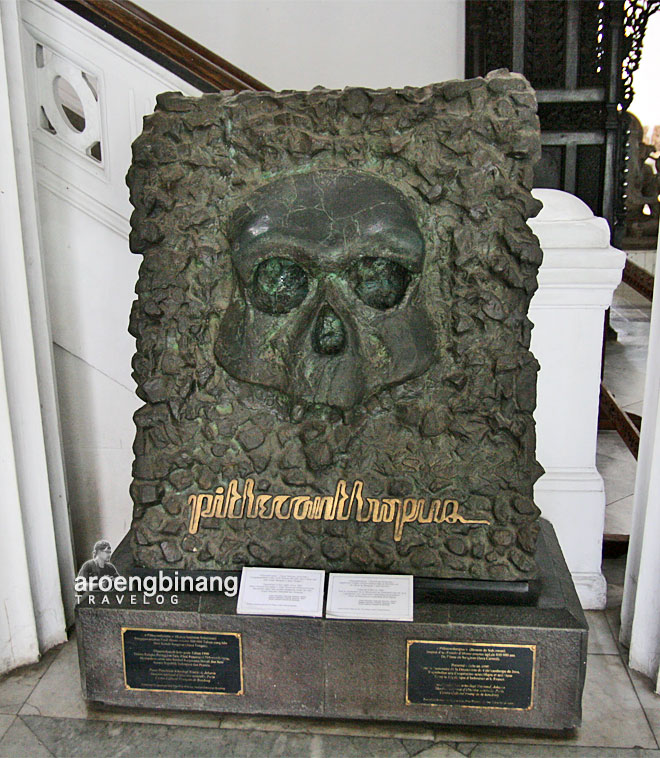 museum nasional indonesia pythecanthropus homo erectus paleojavanicus