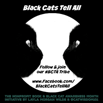 Black Cats Tell All #bcta