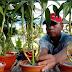 Tanaman Herbal : Prospek Cemerlang untuk Hidup Lebih Sehat dan Mudah