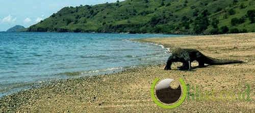 Pulau Komodo – Nusa Tenggara Timur