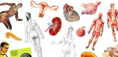 Organos de los seres vivos y fisiologia