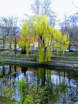 Quietschgrüne Trauerweide am Wasser