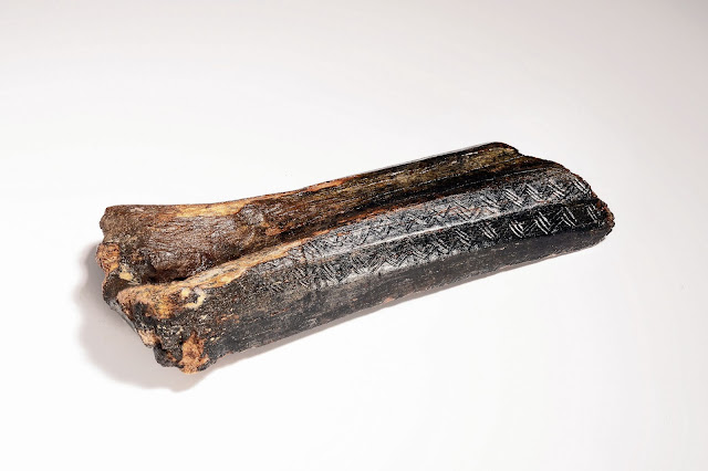 13,500-year-old carved bison bone fished from the bottom of the North Sea