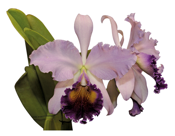 Colombian Tropical Flowers The Magical Realism Of Colombian Orchids