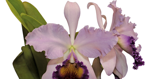 The Magical Realism of Colombian Orchids: Give the Gift of the Tropics