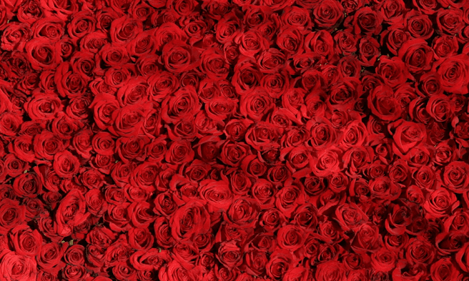 99 Roses Bouquet Your Perfect Romantic Gift
