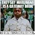 """カリフォルニア大学バークレー校(通称""""UCバークレー"""")「大麻はオピオイドの代わりになる」米国科学アカデミー「大麻がゲートウェイドラッグになるという話は全くのデタラメだ。」"""