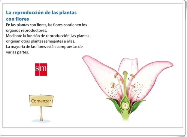 """""""La reproducción de las plantas con flores"""" (Presentación de Ciencias Naturales de Primaria)"""